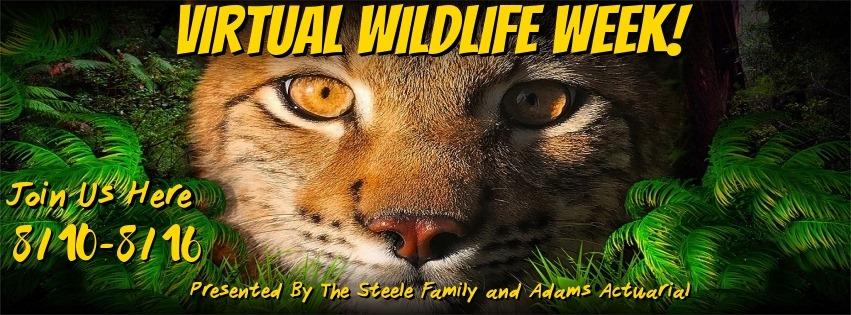 117402752 4159291734142514 6457956115795651329 n - It's Virtual Wildlife Week at Bridges for Brain Injury, Inc.