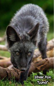 Luna 190x300 - Be a Wildlife Rockstar With a Donation