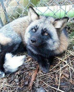 Ringo 241x300 - Be a Wildlife Rockstar With a Donation