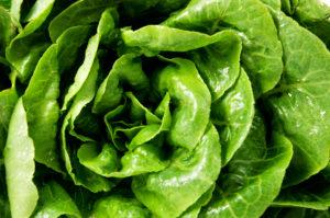 bigstock 1482690591 300x199 - Fresh green lettuce salad leaves closeup. Vegetable salad lettuce.