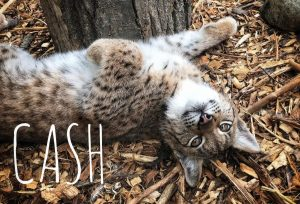 cash 300x204 - Be a Wildlife Rockstar With a Donation